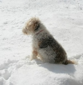 ellie on snowbank
