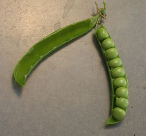 green arrow peas in pod