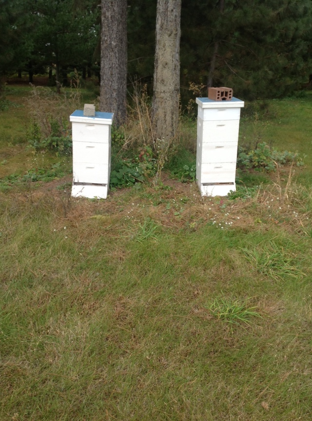 bee hives 10-14