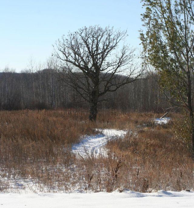 ski path with oak
