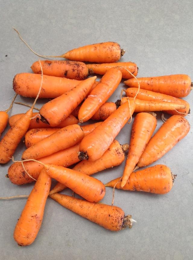 december carrots