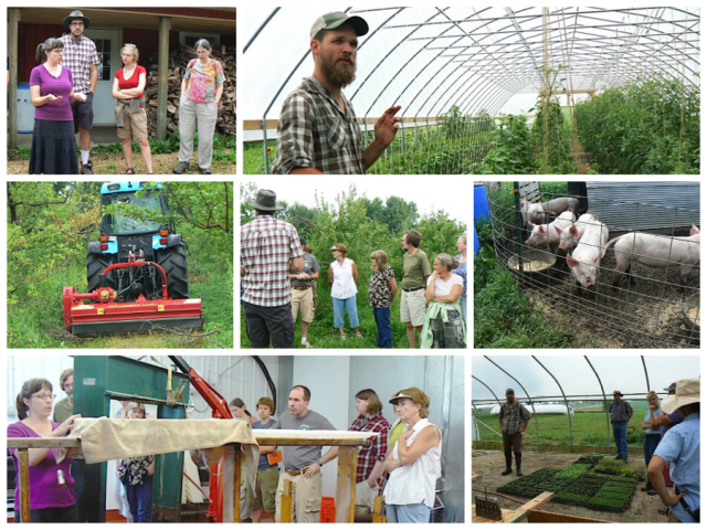 collage from last year's sfa festival of farms