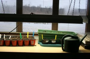 seed bench in february