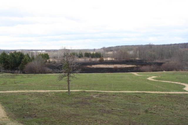 wetland burn 4-2015
