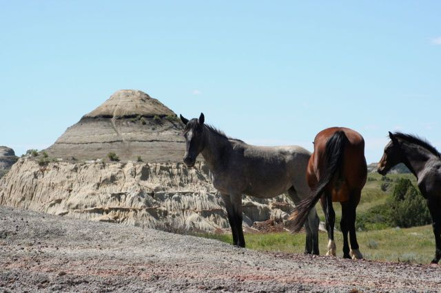 grey horse and butte