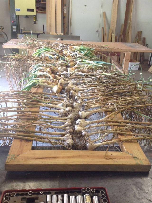 onion garlic drying shop