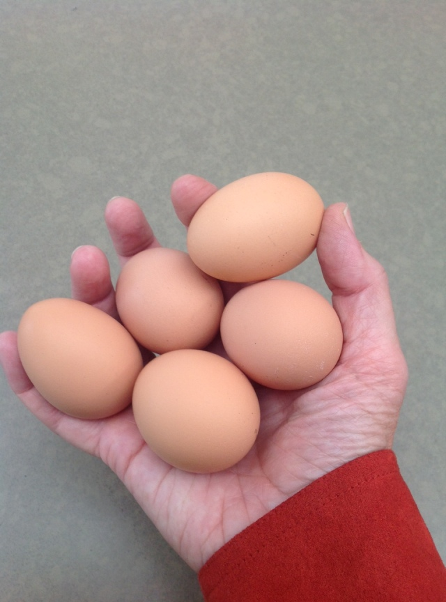 five eggs in the hand