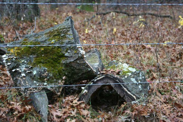 sherburne hollow tree stumps