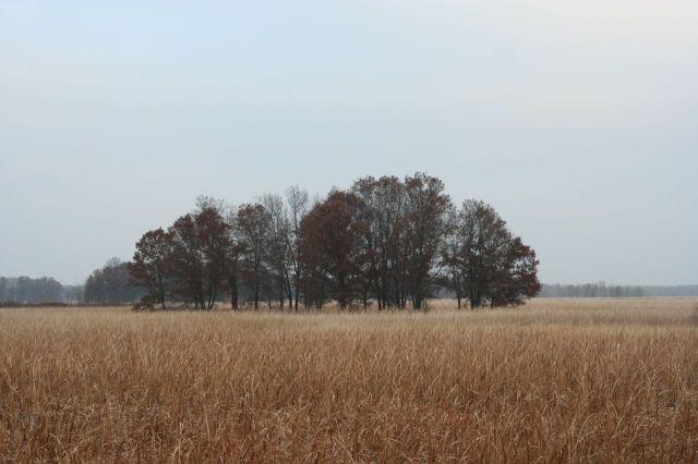 sherburne trees grasses nov 15