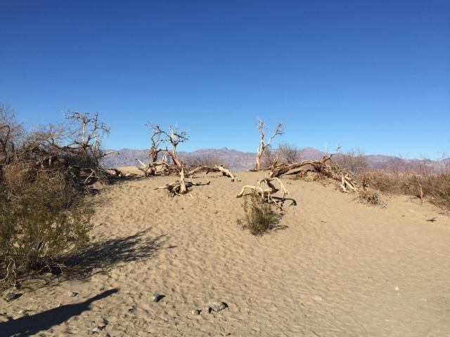 date farm desert