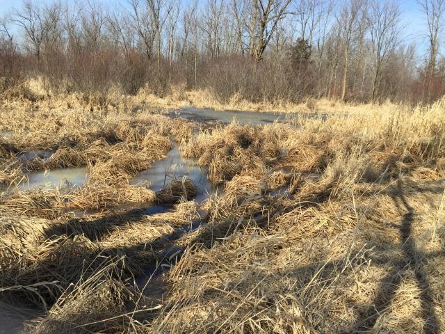 wetlands 3-6-16